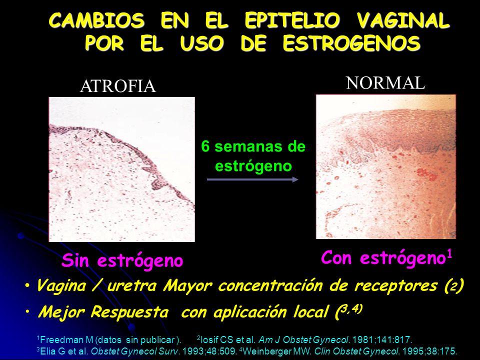 6 semanas de estrógeno Sin estrógeno Con estrógeno 1 1 Freedman M (datos sin publicar ). 2 Iosif CS et al. Am J Obstet Gynecol. 1981;141:817. 3 Elia G