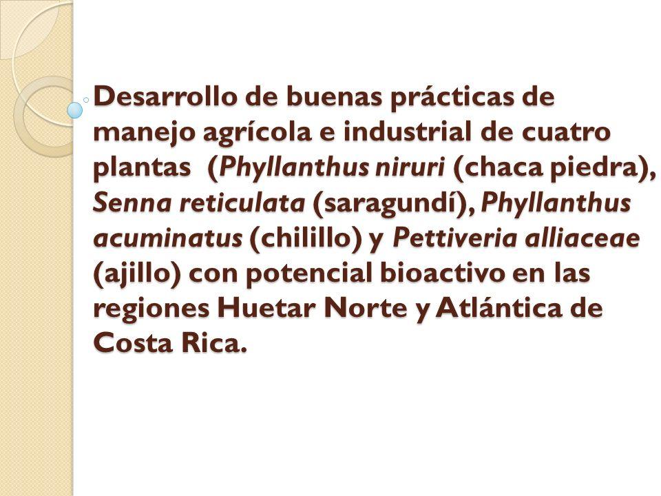 Desarrollo de buenas prácticas de manejo agrícola e industrial de cuatro plantas (Phyllanthus niruri (chaca piedra), Senna reticulata (saragundí), Phy