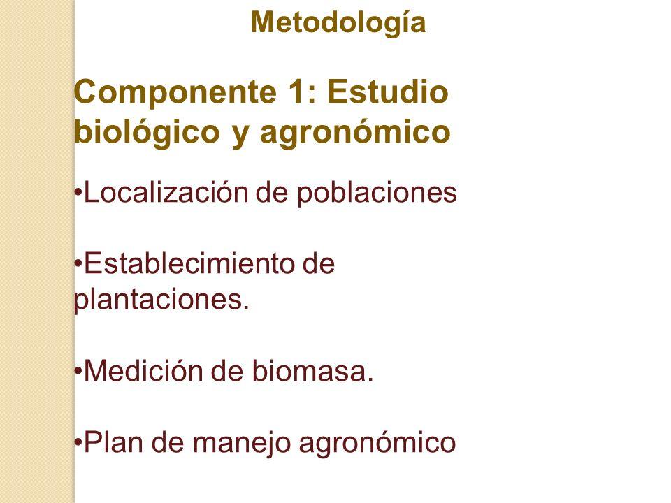 Componente 1: Estudio biológico y agronómico Localización de poblaciones Establecimiento de plantaciones. Medición de biomasa. Plan de manejo agronómi