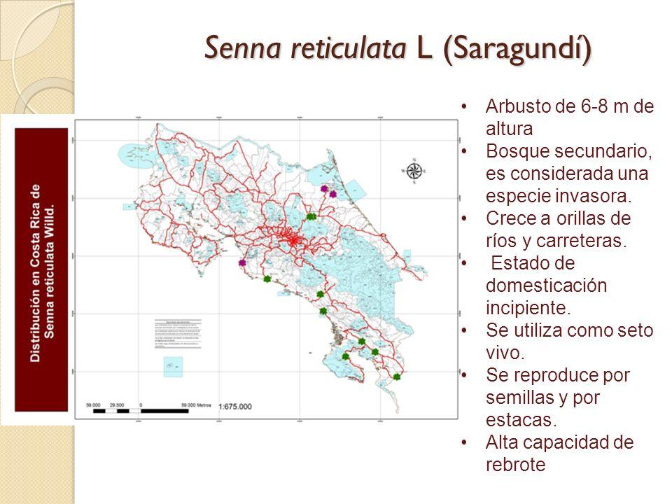 Senna reticulata L (Saragundí) Arbusto de 6-8 m de altura Bosque secundario, es considerada una especie invasora. Crece a orillas de ríos y carreteras