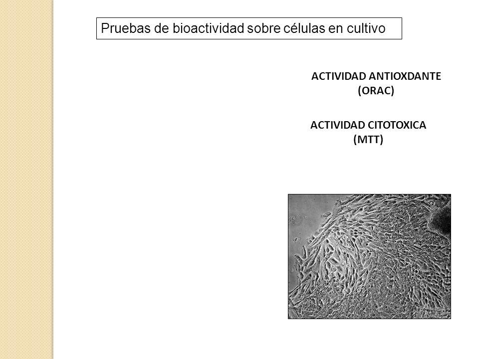 Pruebas de bioactividad sobre células en cultivo ACTIVIDAD ANTIOXDANTE (ORAC) ACTIVIDAD CITOTOXICA (MTT)