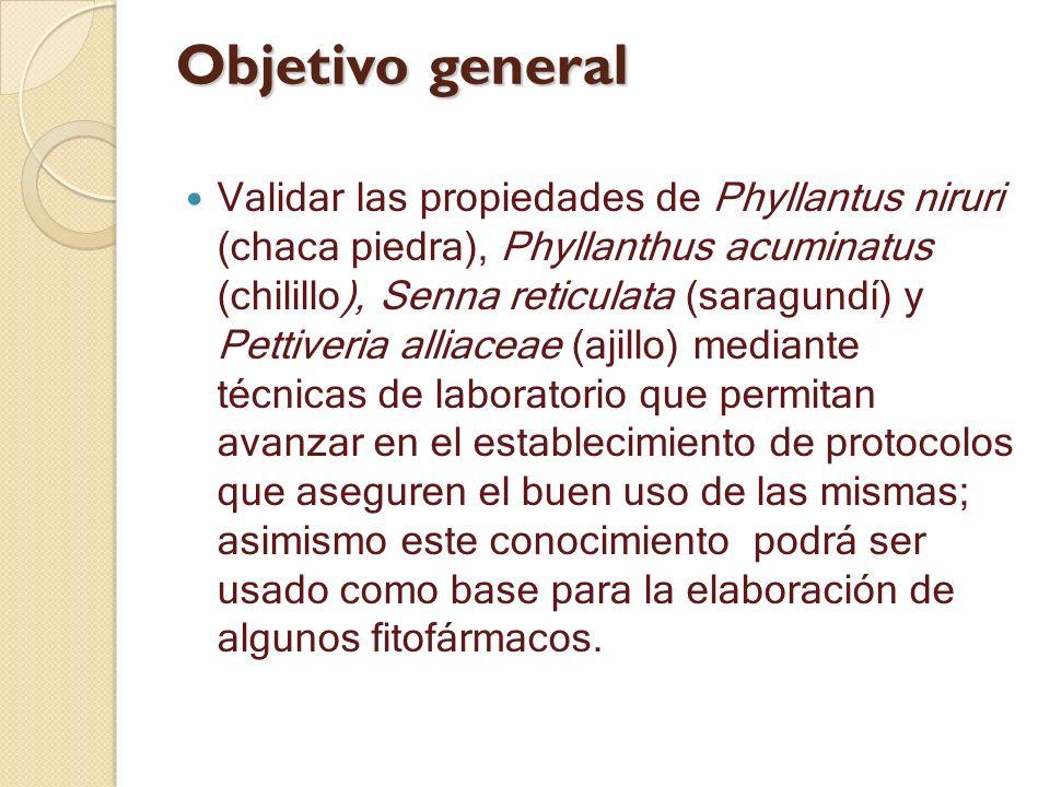 Objetivo general Validar las propiedades de Phyllantus niruri (chaca piedra), Phyllanthus acuminatus (chilillo), Senna reticulata (saragundí) y Pettiv