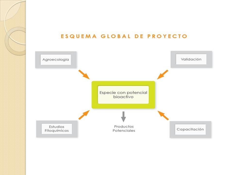 Componente 3: Programa de capacitación, elaboración de materiales y divulgación Cursos, talleres, días de campo, encuentros, elaboración de banner y panfletos- Eventos a nivel nacional e internacional.