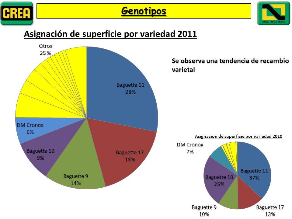 Genotipos Se observa una tendencia de recambio varietal
