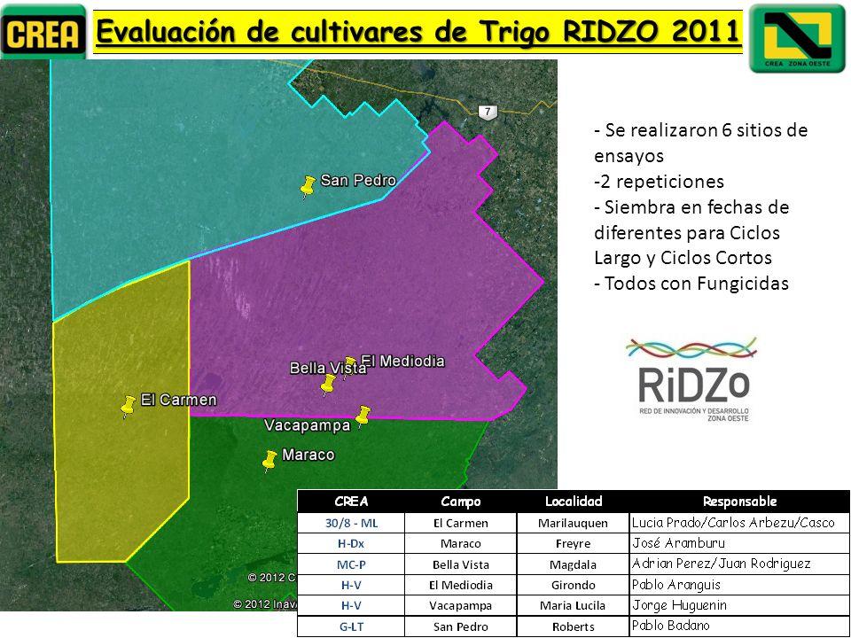 Evaluación de cultivares de Trigo RIDZO 2011 - Se realizaron 6 sitios de ensayos -2 repeticiones - Siembra en fechas de diferentes para Ciclos Largo y Ciclos Cortos - Todos con Fungicidas