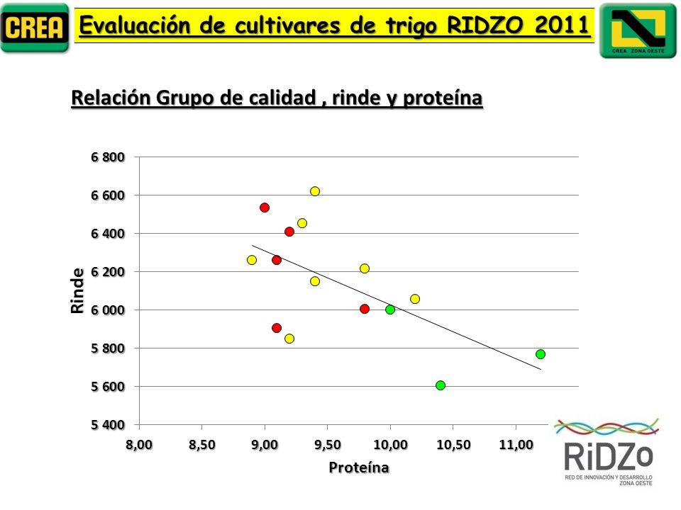Evaluación de cultivares de trigo RIDZO 2011 Relación Grupo de calidad, rinde y proteína
