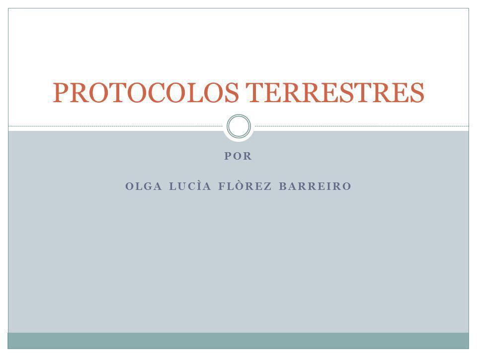 POR OLGA LUCÌA FLÒREZ BARREIRO PROTOCOLOS TERRESTRES