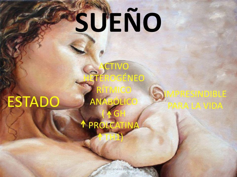 SUEÑO ESTADO ACTIVO HETEROGÉNEO RÍTMICO ANABÓLICO ( GH PROLCATINA TH1) IMPRESINDIBLE PARA LA VIDA www.lanesu.com.ar