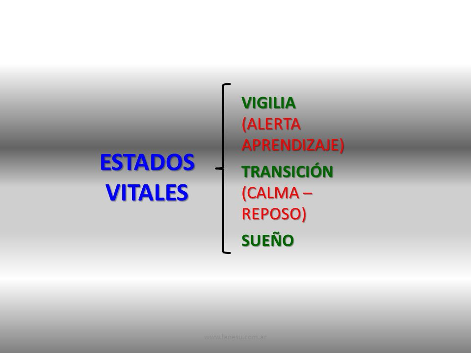 ESTADOS VITALES VIGILIA (ALERTA APRENDIZAJE) TRANSICIÓN (CALMA – REPOSO) SUEÑO www.lanesu.com.ar