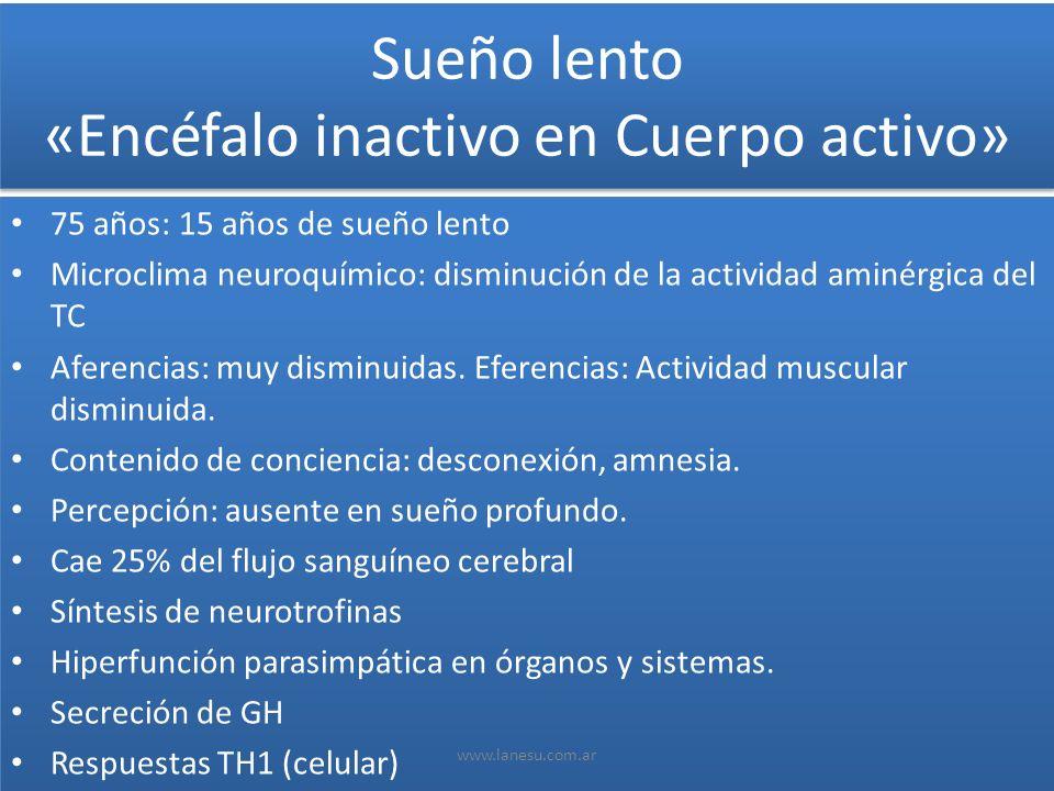 Sueño lento «Encéfalo inactivo en Cuerpo activo» 75 años: 15 años de sueño lento Microclima neuroquímico: disminución de la actividad aminérgica del T