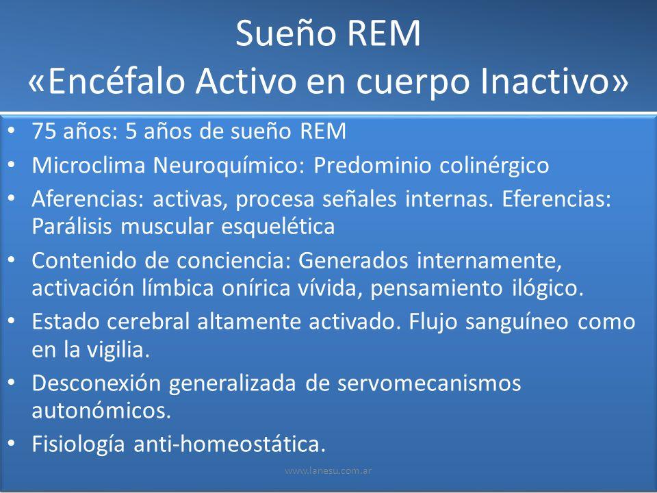 Sueño REM «Encéfalo Activo en cuerpo Inactivo» 75 años: 5 años de sueño REM Microclima Neuroquímico: Predominio colinérgico Aferencias: activas, proce