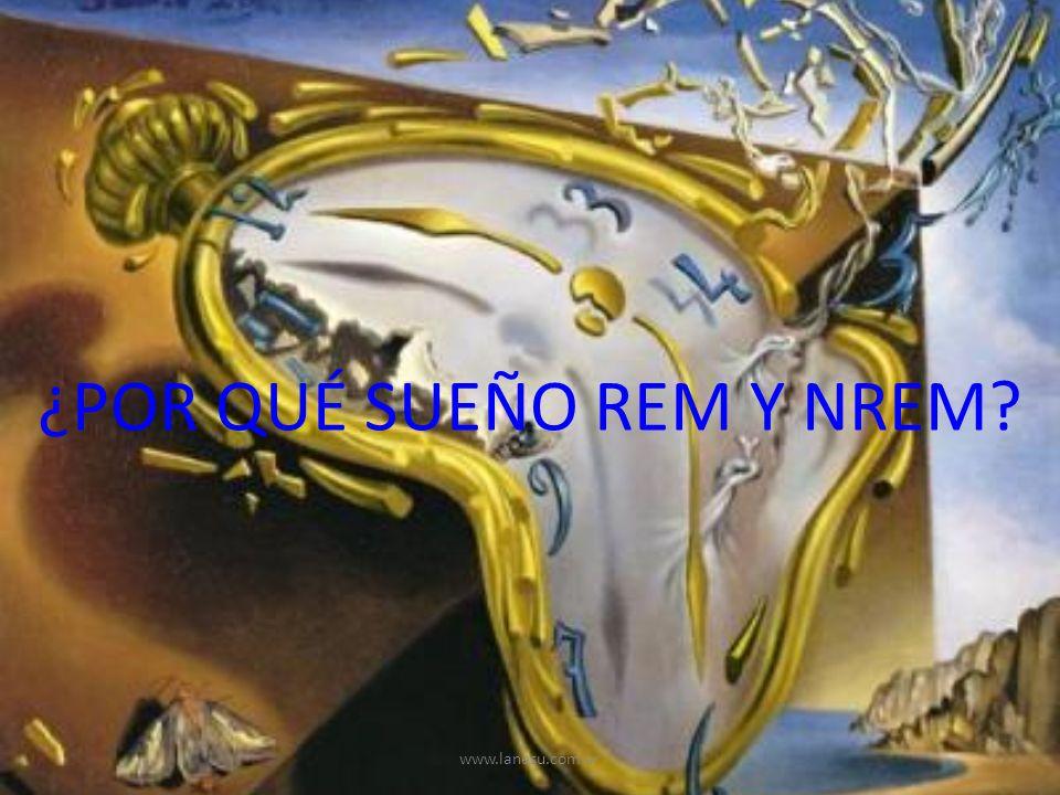 ¿POR QUÉ SUEÑO REM Y NREM? www.lanesu.com.ar
