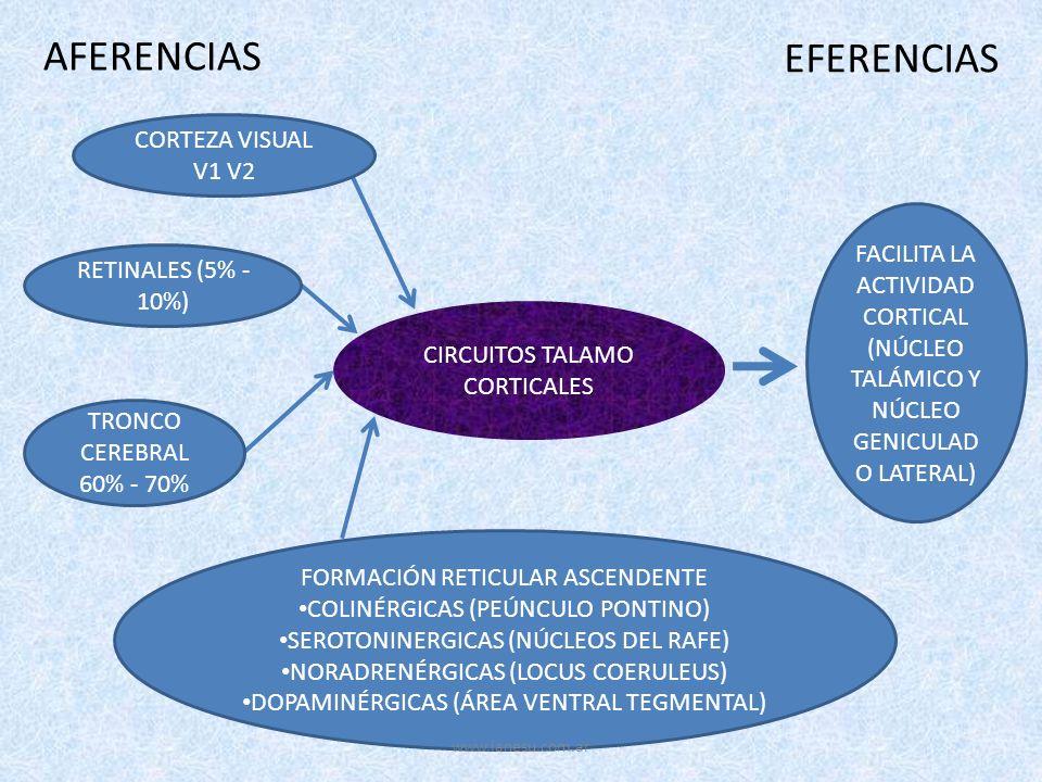 CIRCUITOS TALAMO CORTICALES AFERENCIAS EFERENCIAS CORTEZA VISUAL V1 V2 RETINALES (5% - 10%) TRONCO CEREBRAL 60% - 70% FORMACIÓN RETICULAR ASCENDENTE C