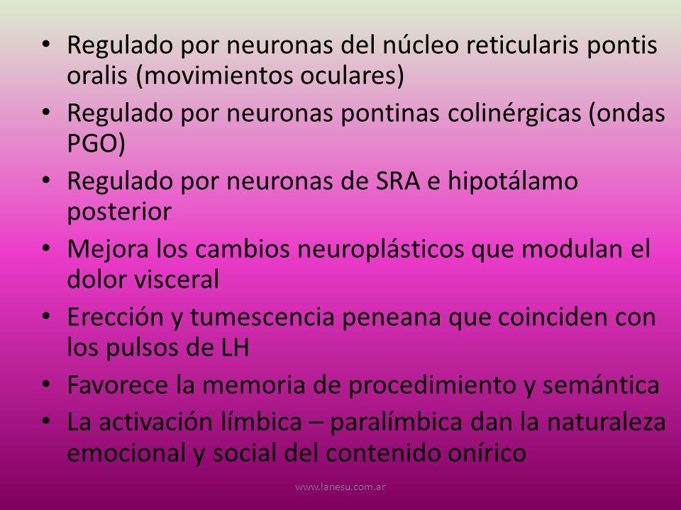 Regulado por neuronas del núcleo reticularis pontis oralis (movimientos oculares) Regulado por neuronas pontinas colinérgicas (ondas PGO) Regulado por