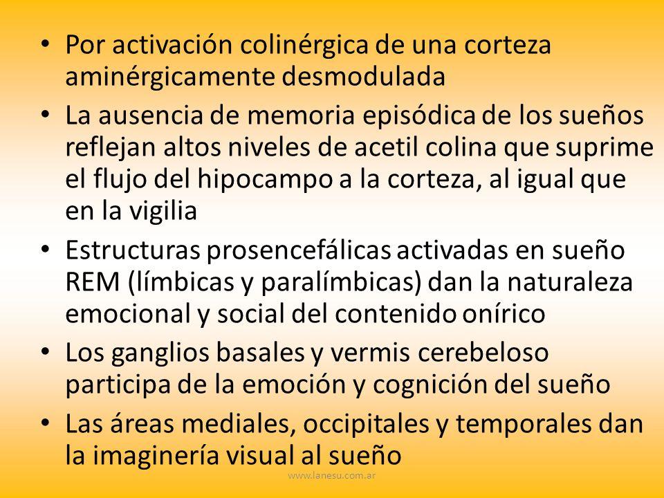 Por activación colinérgica de una corteza aminérgicamente desmodulada La ausencia de memoria episódica de los sueños reflejan altos niveles de acetil
