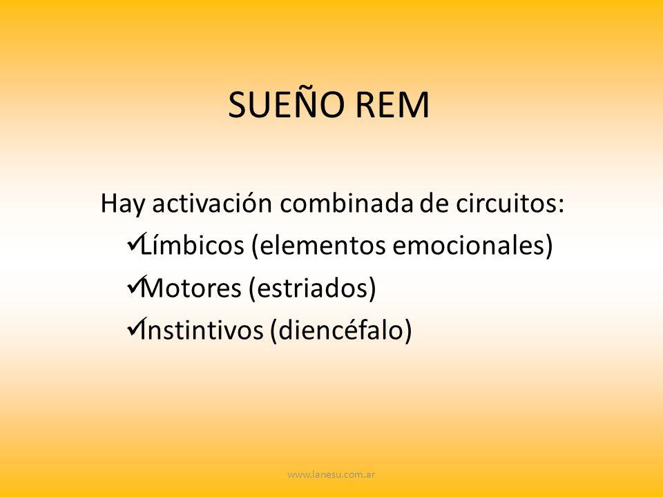 SUEÑO REM Hay activación combinada de circuitos: Límbicos (elementos emocionales) Motores (estriados) Instintivos (diencéfalo) www.lanesu.com.ar