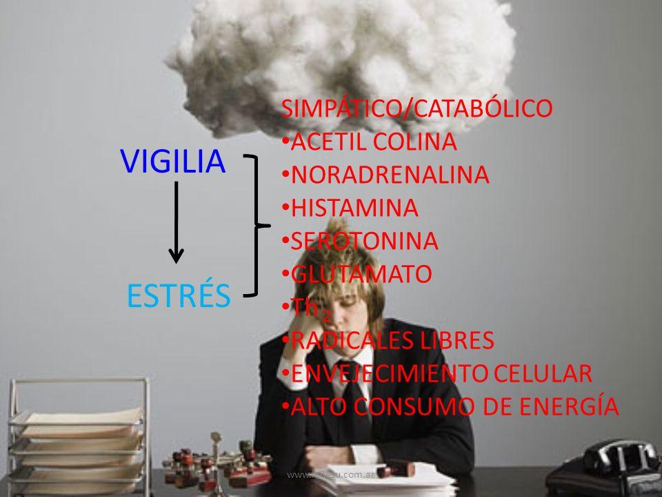 VIGILIA ESTRÉS SIMPÁTICO/CATABÓLICO ACETIL COLINA NORADRENALINA HISTAMINA SEROTONINA GLUTAMATO Th 2 RADICALES LIBRES ENVEJECIMIENTO CELULAR ALTO CONSU