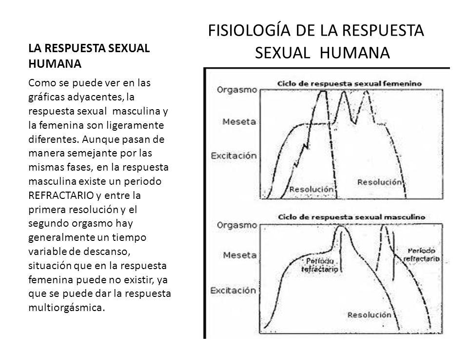 LA RESPUESTA SEXUAL HUMANA FISIOLOGÍA DE LA RESPUESTA SEXUAL HUMANA Como se puede ver en las gráficas adyacentes, la respuesta sexual masculina y la f