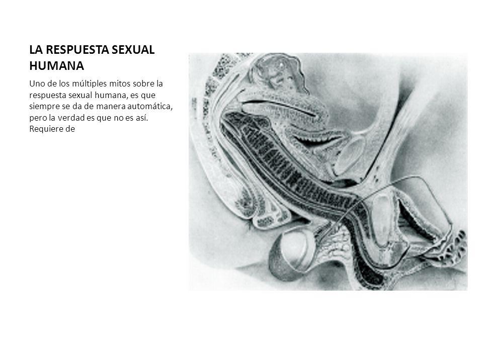 LA RESPUESTA SEXUAL HUMANA Uno de los múltiples mitos sobre la respuesta sexual humana, es que siempre se da de manera automática, pero la verdad es q