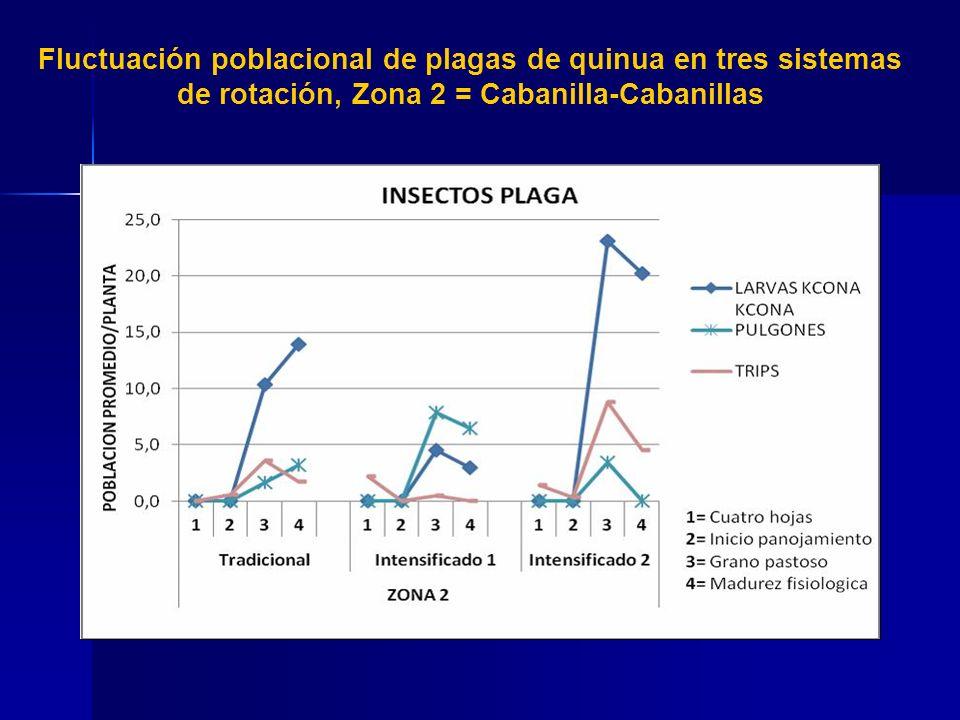 Fluctuación poblacional de plagas de quinua en tres sistemas de rotación, Zona 3 = Vilque- Mañazo