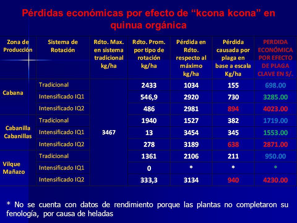 Efecto población promedio Kcona kcona por planta sobre el rendimiento en el cultivo (kg/ha) Nº de larvas/planta fase 3 Vs rendimiento SE HAN ENCONTRADO EVIDENCIAS Nº de larvas/planta fase 4 Vs Rdto NO SE HAN ENCONTRADO EVIDENCIAS.