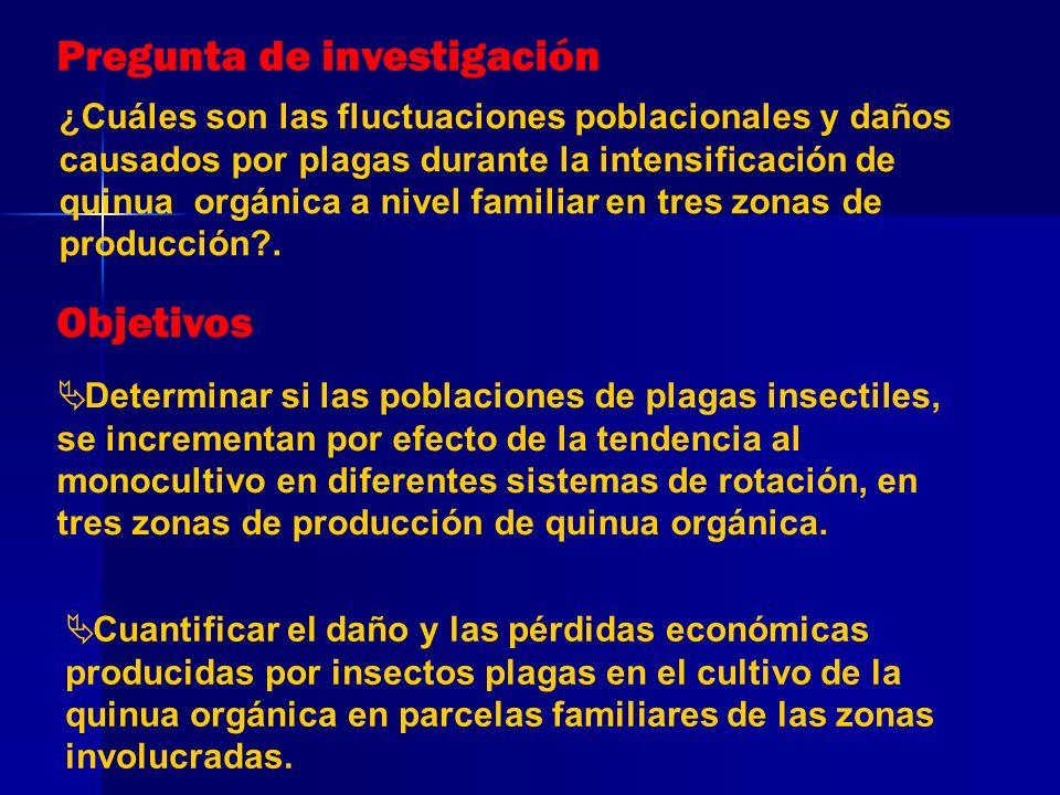 METODOLOGIA Ubicación del estudio Área total aproximada 2505 km² 3 Zonas (3 provincias Puno) Cabana 3901 msnm Cabanilla (s) 3876-3885 msnm Vilque-Mañazo 3860-3920 msnm 27 parcelas muestreadas (9 parcelas por zona) 3 Sistemas rotación (Tradicional=T, Intensificado=IQ1, Altamente intensificado=IQ2) Z3 Z1 Z2