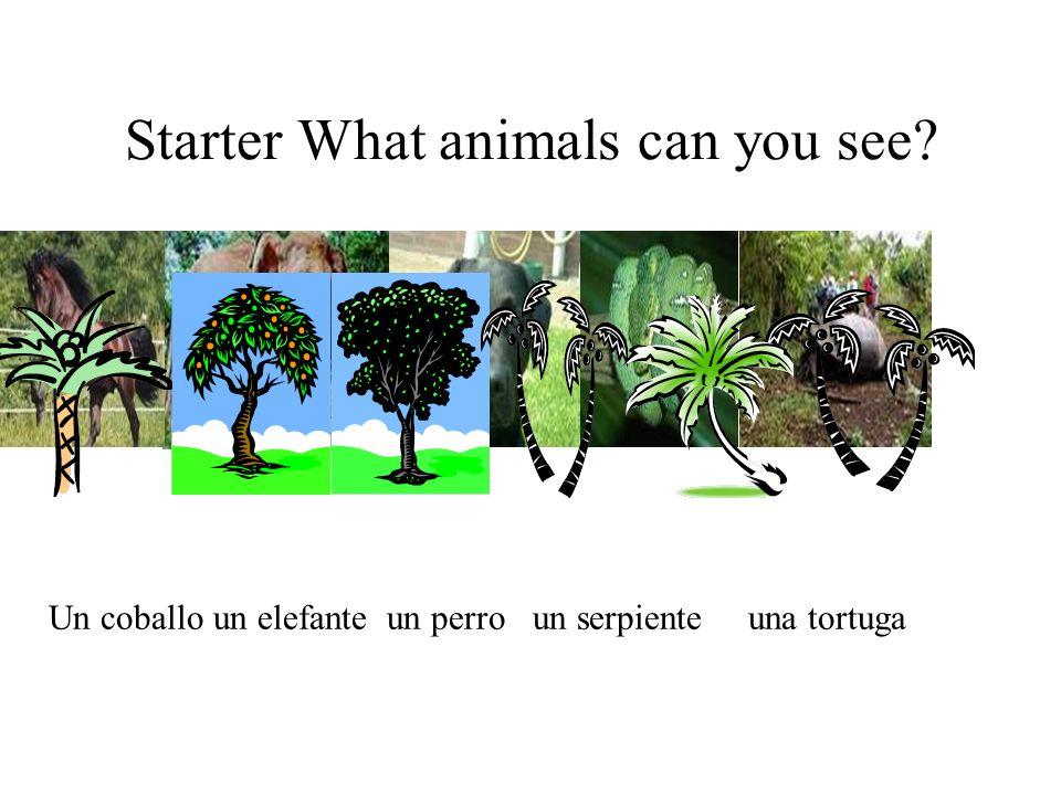 Starter What animals can you see? Un coballo un elefante un perro un serpiente una tortuga
