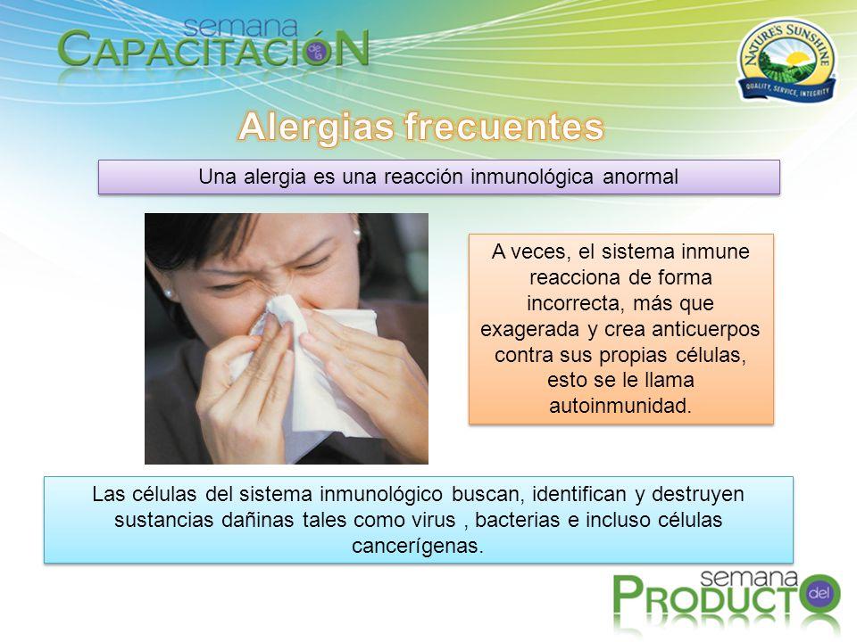 Una alergia es una reacción inmunológica anormal Las células del sistema inmunológico buscan, identifican y destruyen sustancias dañinas tales como virus, bacterias e incluso células cancerígenas.