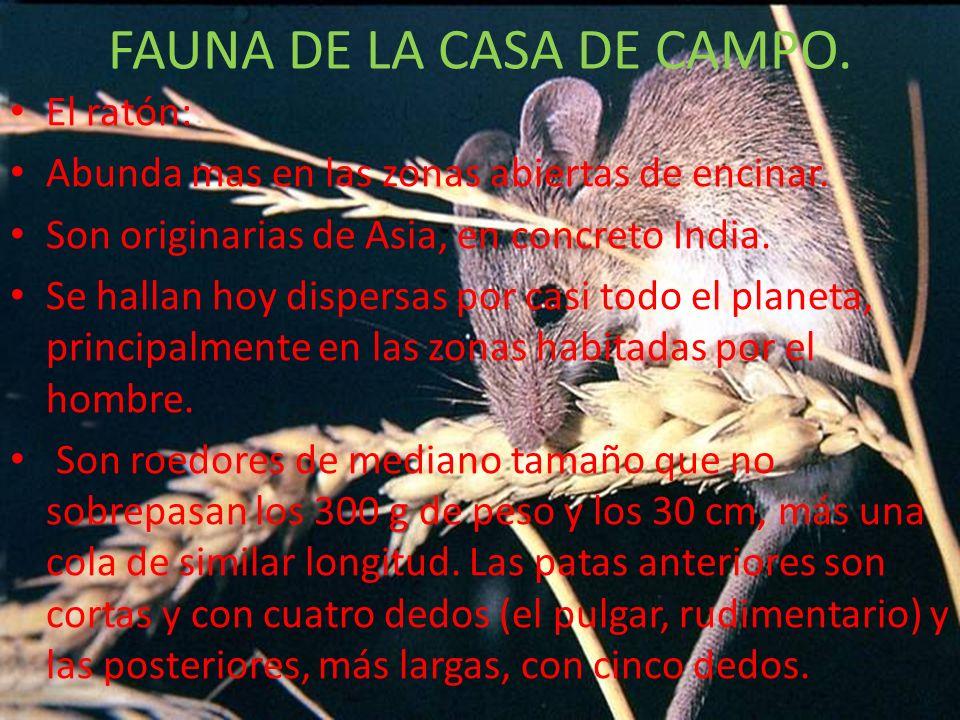 FLORA DE LA CASA DE CAMPO.