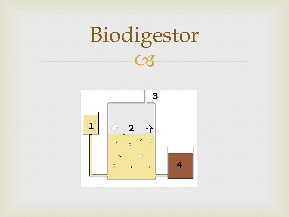Diferentes biodigestores