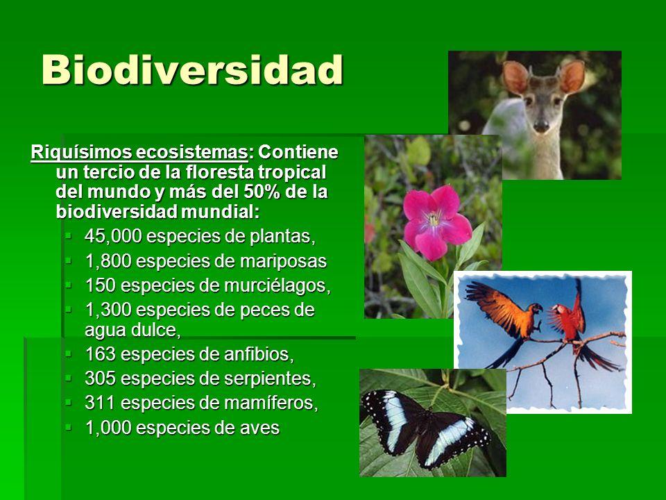 Biodiversidad Riquísimos ecosistemas: Contiene un tercio de la floresta tropical del mundo y más del 50% de la biodiversidad mundial: 45,000 especies
