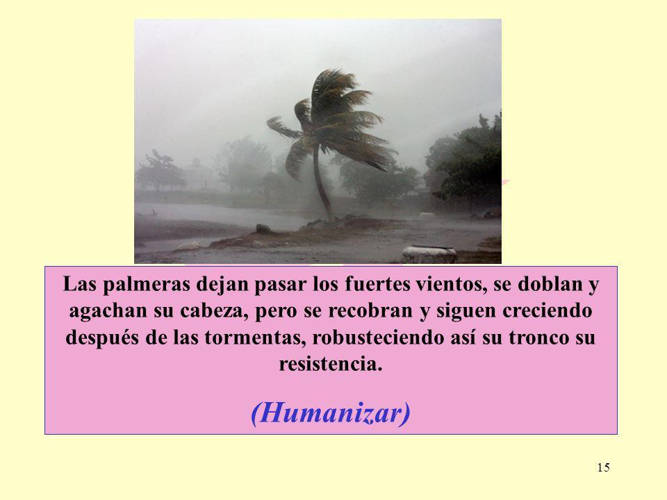 15 Las palmeras dejan pasar los fuertes vientos, se doblan y agachan su cabeza, pero se recobran y siguen creciendo después de las tormentas, robustec