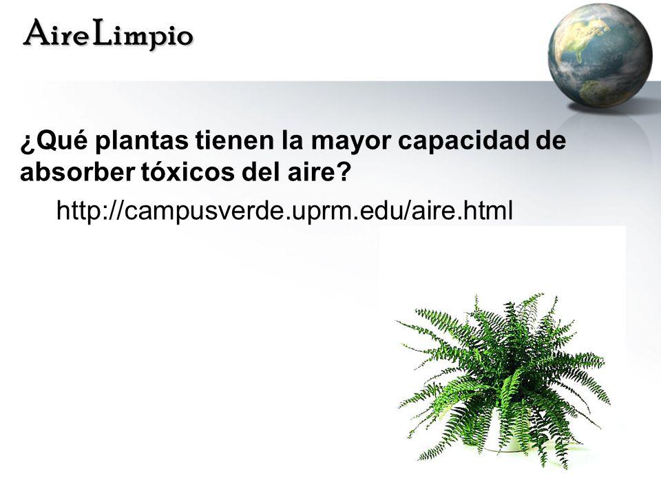 Aire Limpio ¿Qué plantas tienen la mayor capacidad de absorber tóxicos del aire? http://campusverde.uprm.edu/aire.html