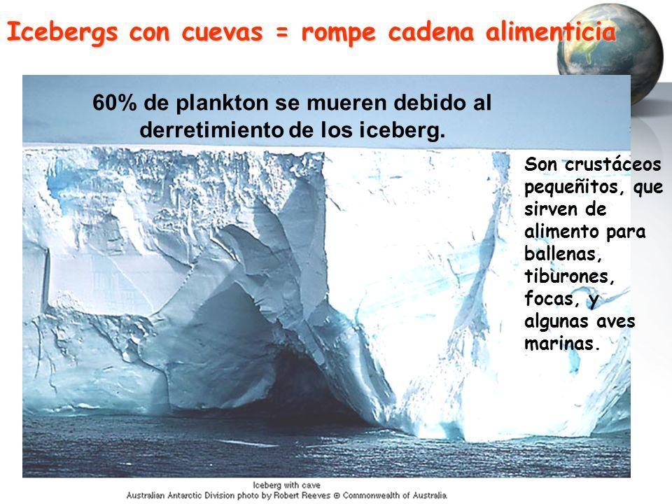 Icebergs con cuevas = rompe cadena alimenticia 60% de plankton se mueren debido al derretimiento de los iceberg. Son crustáceos pequeñitos, que sirven
