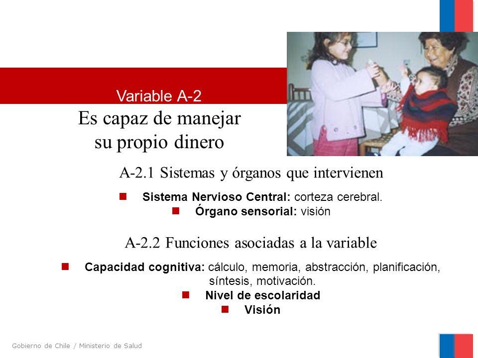 Gobierno de Chile / Ministerio de Salud A-2.1 Sistemas y órganos que intervienen Sistema Nervioso Central: corteza cerebral. Órgano sensorial: visión