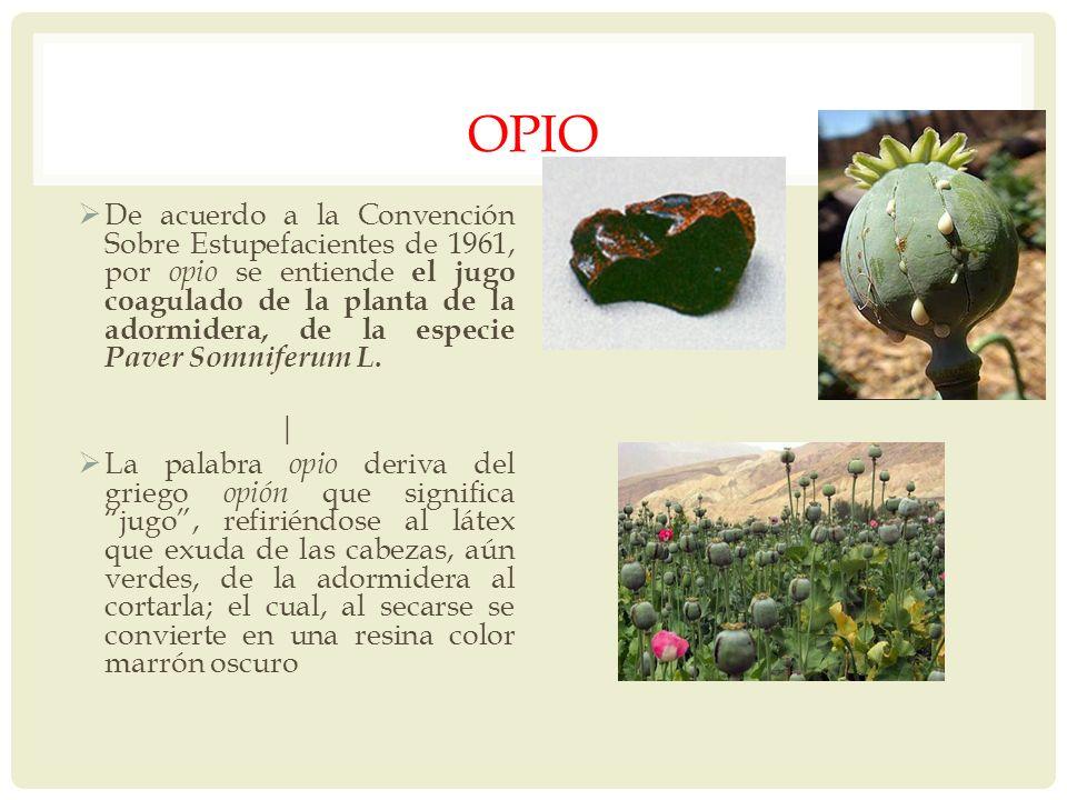 OPIO De acuerdo a la Convención Sobre Estupefacientes de 1961, por opio se entiende el jugo coagulado de la planta de la adormidera, de la especie Pav