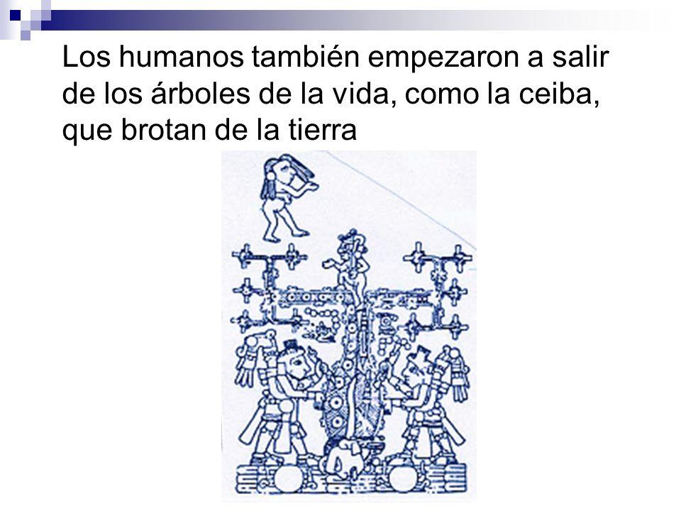 Los humanos también empezaron a salir de los árboles de la vida, como la ceiba, que brotan de la tierra