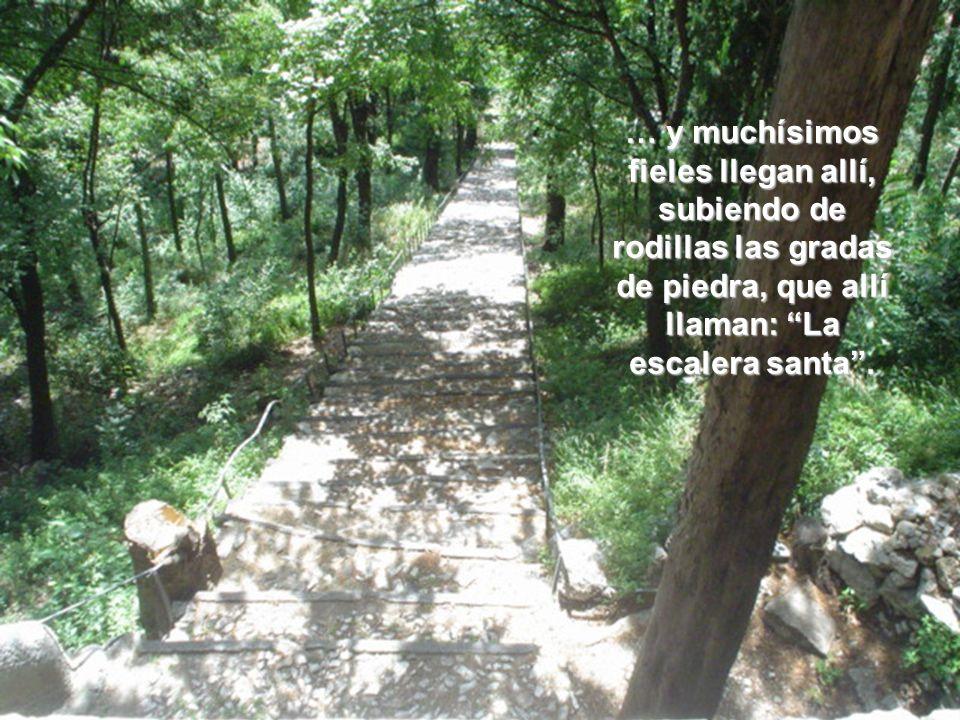 … y muchísimos fieles llegan allí, subiendo de rodillas las gradas de piedra, que allí llaman: La escalera santa.