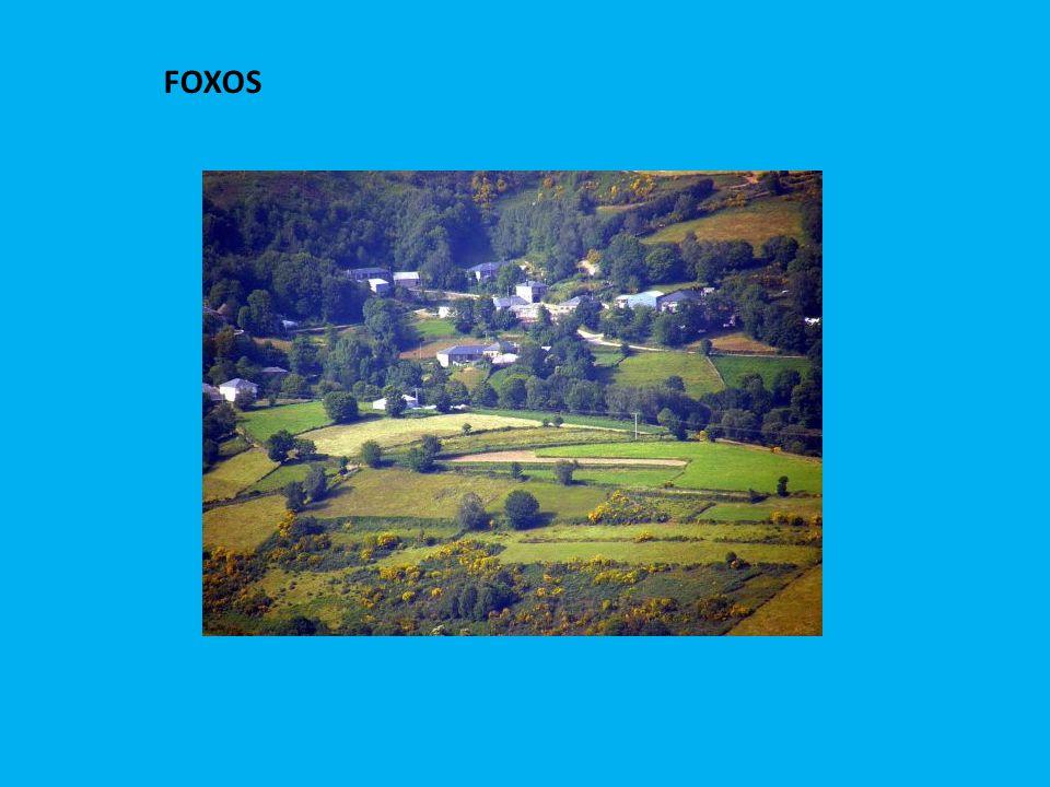 FOXOS