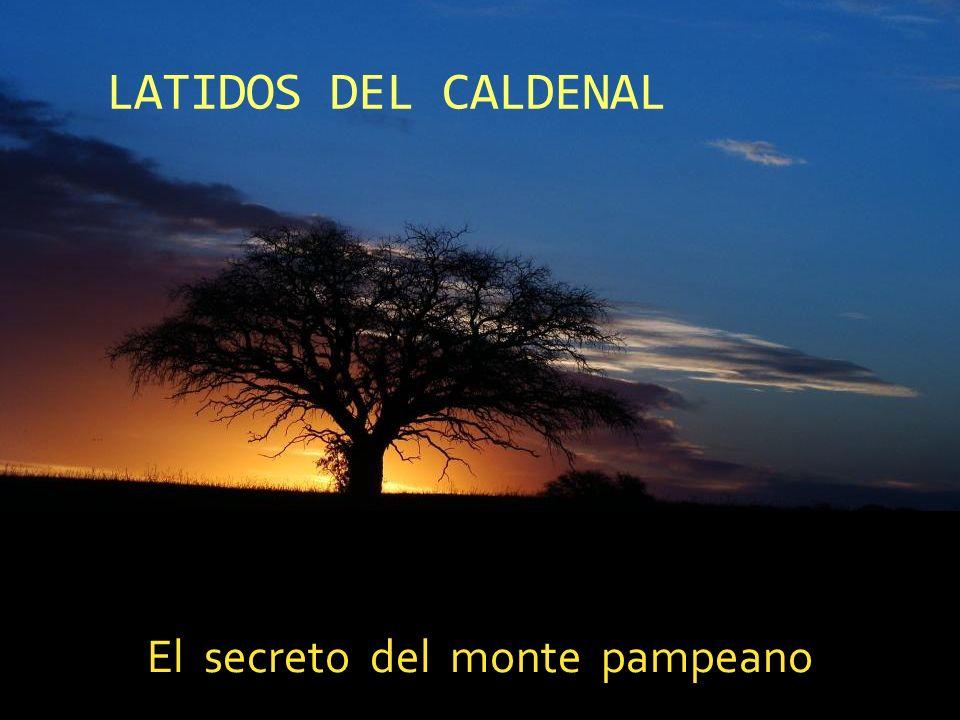 LATIDOS DEL CALDENAL El secreto del monte pampeano