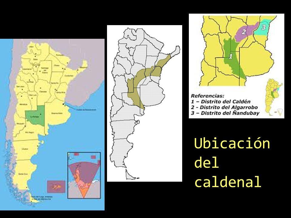 El Caldén, endémico en la República Argentina y único en el mundo Es el símbolo de la geografía cultural pampeana