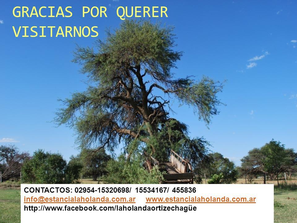 GRACIAS POR QUERER VISITARNOS CONTACTOS: 02954-15320698/ 15534167/ 455836 info@estancialaholanda.com.arinfo@estancialaholanda.com.ar www.estancialahol