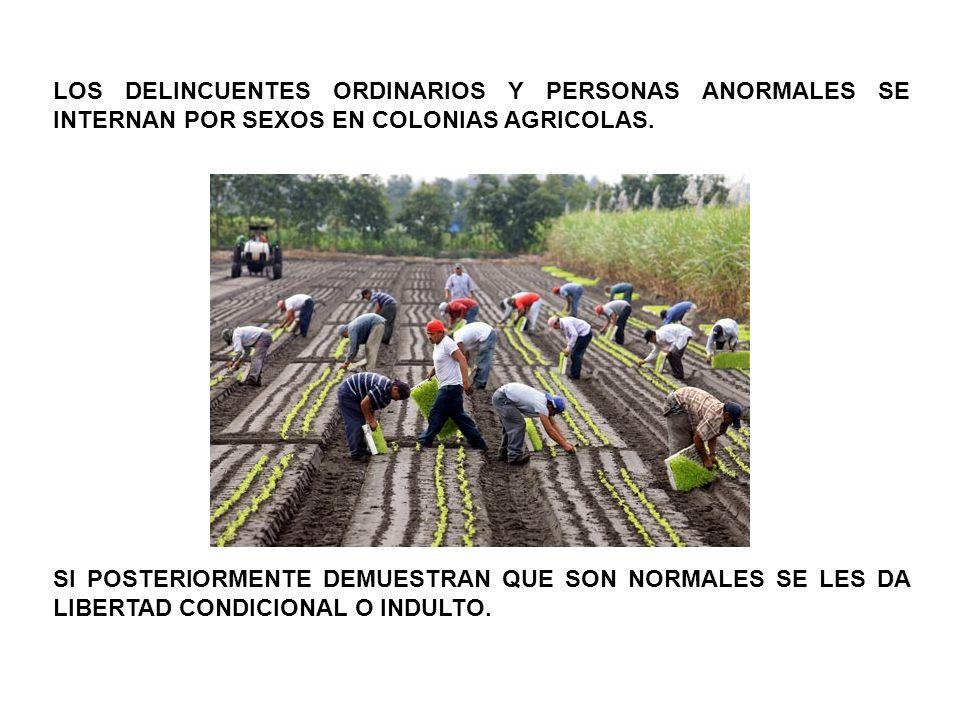 LOS DELINCUENTES ORDINARIOS Y PERSONAS ANORMALES SE INTERNAN POR SEXOS EN COLONIAS AGRICOLAS. SI POSTERIORMENTE DEMUESTRAN QUE SON NORMALES SE LES DA