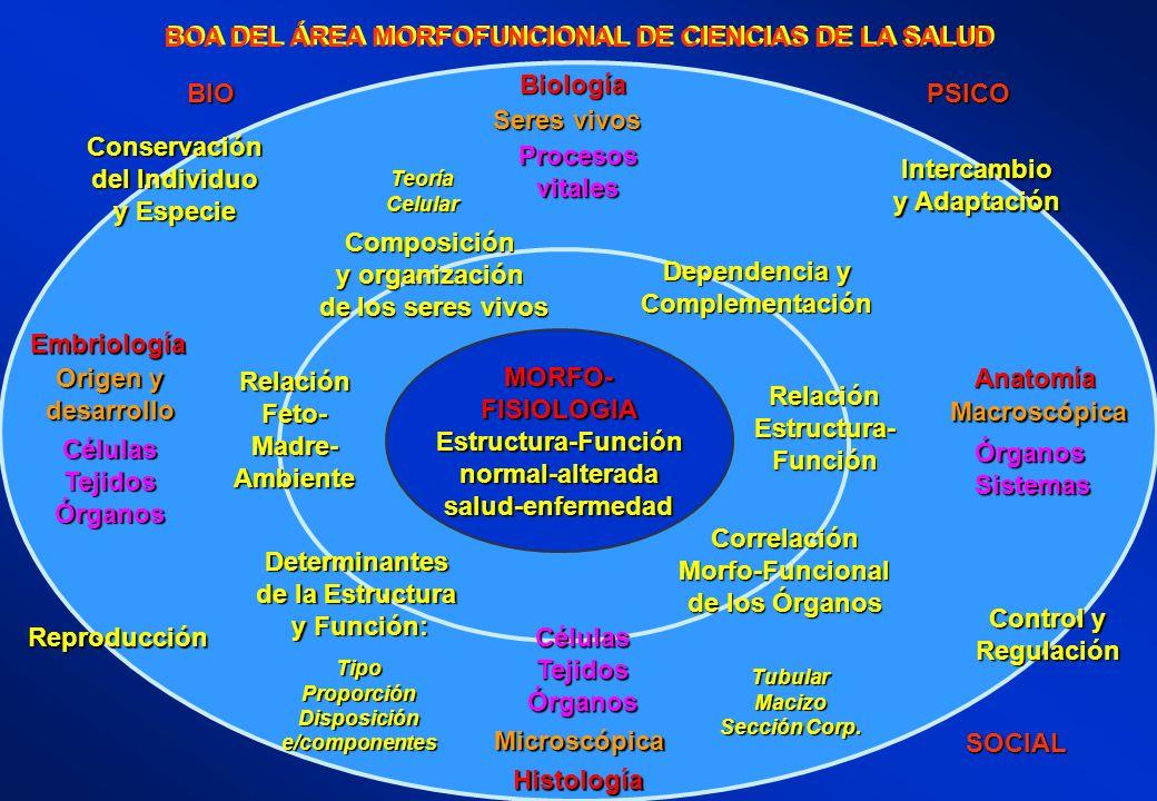 BOA DEL ÁREA MORFOFUNCIONAL DE CIENCIAS DE LA SALUD MORFO-FISIOLOGIAEstructura-Funciónnormal-alteradasalud-enfermedad Histología Microscópica CélulasT