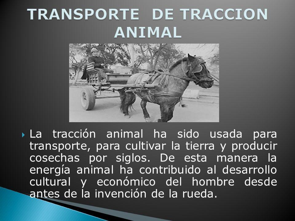 La tracción animal ha sido usada para transporte, para cultivar la tierra y producir cosechas por siglos.