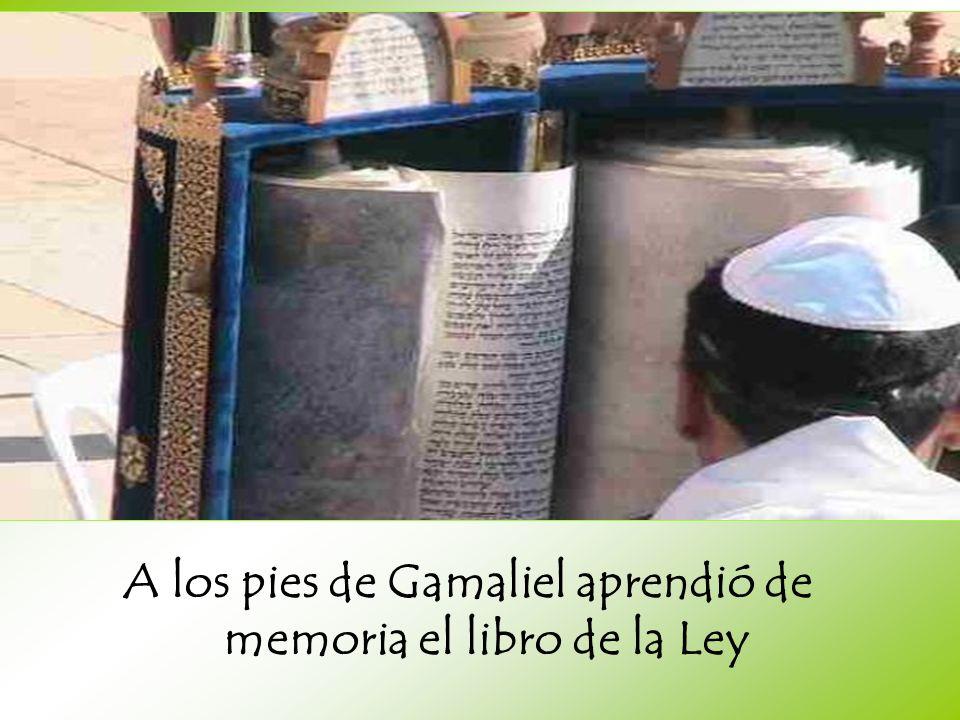 A los pies de Gamaliel aprendió de memoria el libro de la Ley