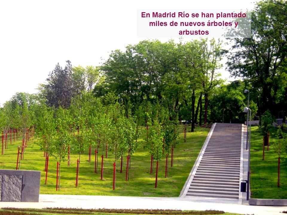 En Madrid Río se han plantado miles de nuevos árboles y arbustos