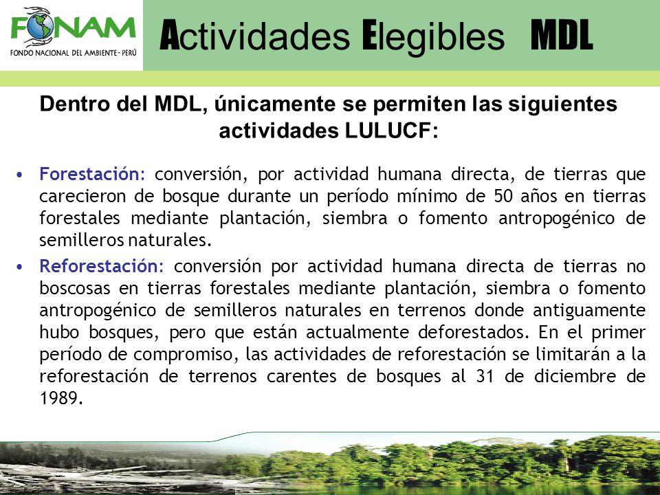 Forestación: conversión, por actividad humana directa, de tierras que carecieron de bosque durante un período mínimo de 50 años en tierras forestales