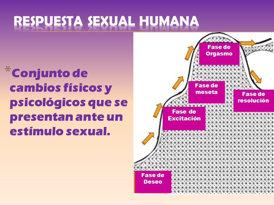 * Conjunto de cambios físicos y psicológicos que se presentan ante un estímulo sexual. Fase de Excitación Fase de meseta Fase de resolución Fase de Or