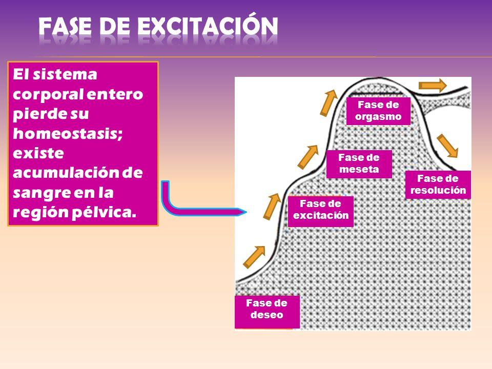 Fase de excitación Fase de meseta Fase de resolución Fase de orgasmo Fase de deseo El sistema corporal entero pierde su homeostasis; existe acumulació